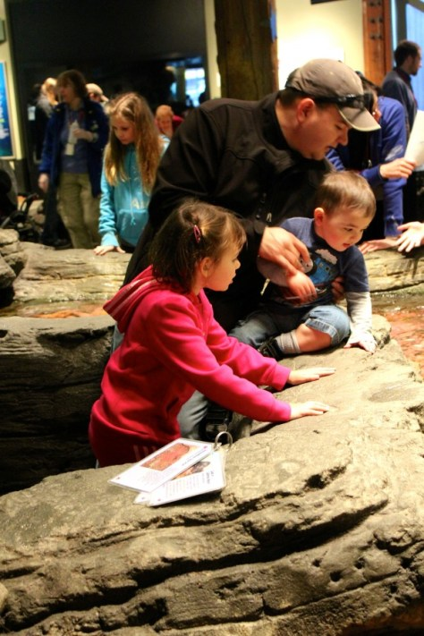 Seattle Aquarium Tide Pools in Seattle, Washington, United States via ZaagiTravel.com