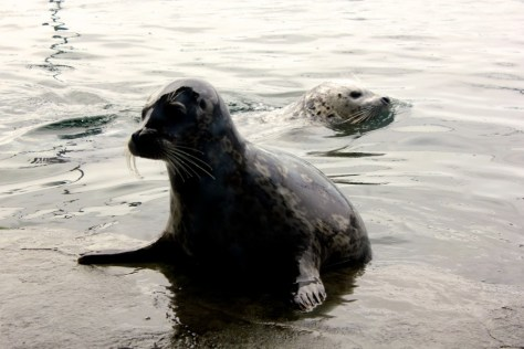 Seals at Seattle Aquarium in Seattle, Washington, United States via ZaagiTravel.com