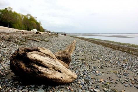 Driftwood and stones on the beach in White Rock, British Columbia, Canada via ZaagiTravel.com