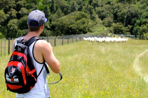 James and sheep at Duder Regional Park in New Zealand via ZaagiTravel.com