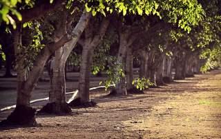 ореховый сад