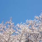 春一番の意味と時期、そして意外な雑学。