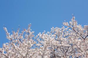 PAK86_sakurasoraharu14095539_TP_V