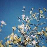 La primavera è primavera anche in città
