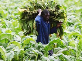 Zimbabwe plans to compensate farmers for seized land
