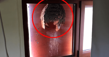 Wasps Build A Huge Nest Outside A Man's Window, Giving Him An Awesome View Of The Inside.