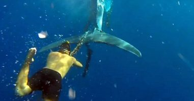 Free Divers Saw A Whale Trapped In A Fishing Line. Watch What Happened Next!