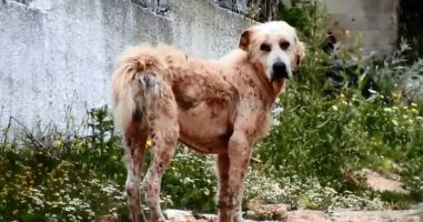 A Greek Dog Rescue Found This Shepherd In Desperate Need Of Help