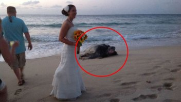 They Were Enjoying Their Beautiful Beach Wedding When All Of A Sudden... THIS. Whoa.