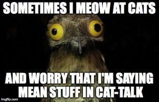 Meow, meow. Meow meow meow?