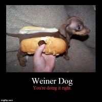 Dogs....Mmmmmm