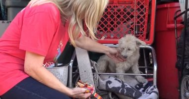 This Dog Was Living Under A Shopping Cart, But She Wasn't Exactly Alone