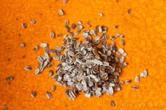 nasiona lubczyku