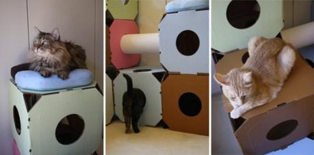kostki-dla-kotow-3 - z karotnu