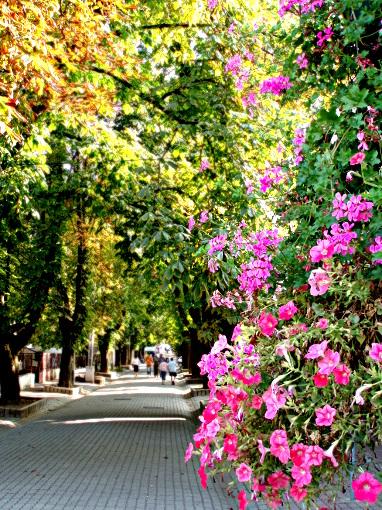 miskolc-tree-alley
