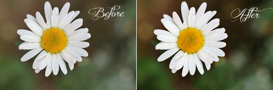 how-to-increase-contrast-in-photoshop-before-and-after