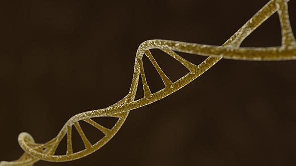 DNA ADN 20preview