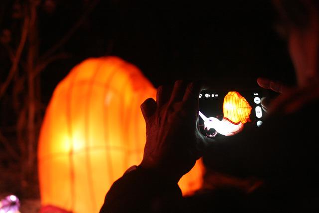 China Light 7