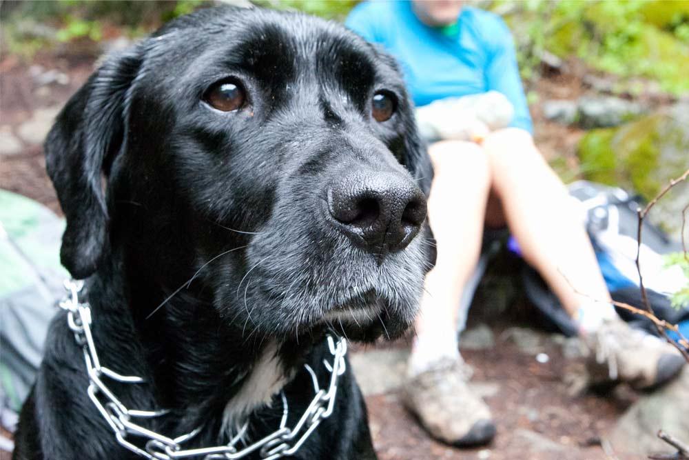 portland dog parks black lab