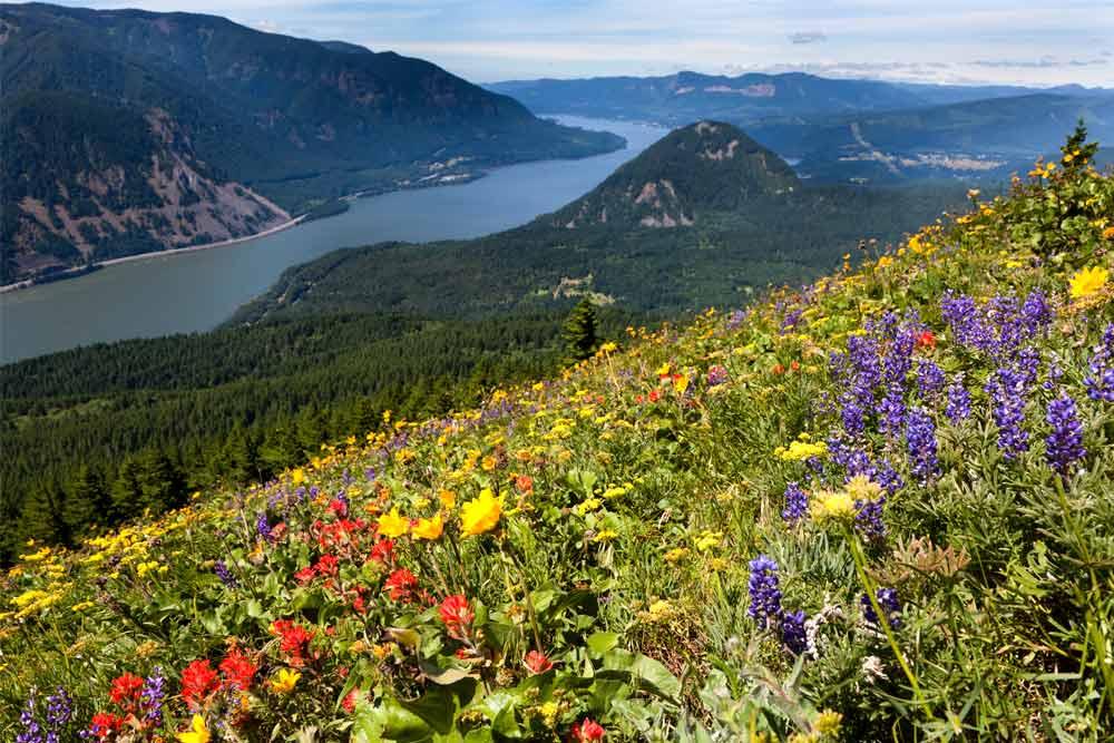 northwest hike dog mountain
