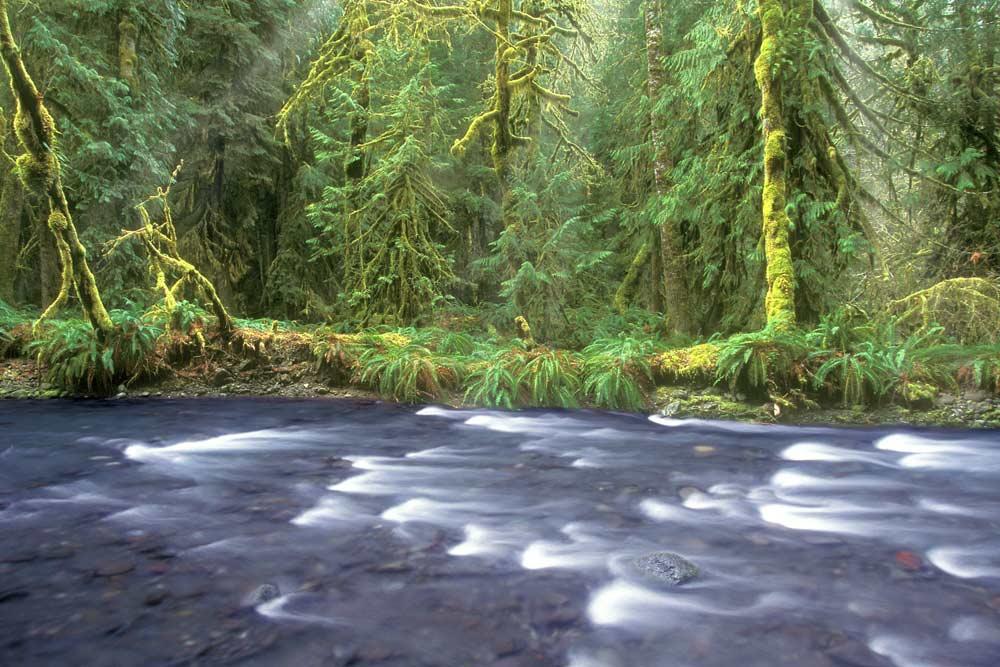 wild trails barnes creek