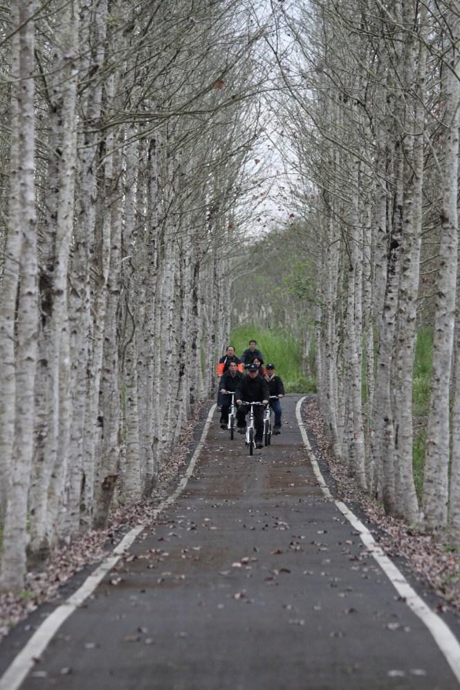 大農大富平地森林園區森林楓香自行車道-1
