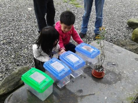 小朋友進行生態觀察