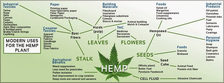 The many uses of modern hemp.