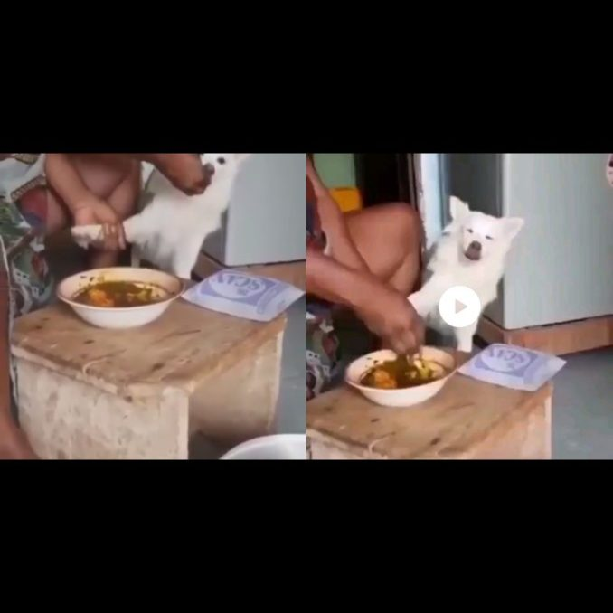 Nigerian mother force-feed her dog which doesn't like eating (video)