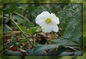 Wendy flower