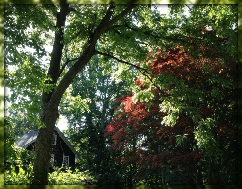A red maple frames 54 North Avenue.