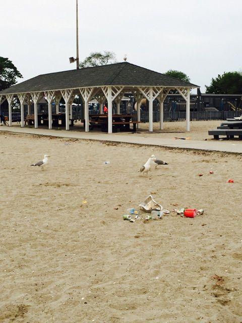 Cleanup seagulls pavilion - Betsy P Kahn