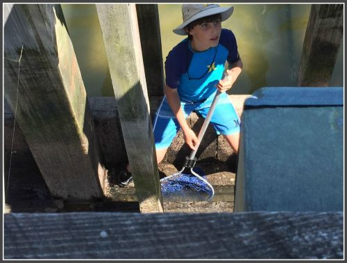 A young boy scampered down between the open tidal gates. He was looking for crabs, but he  also spotted a large turtle and other pond life.