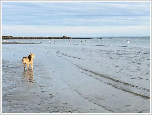 Compo Beach 2 - October 25, 2015 - Betsy P Kahn