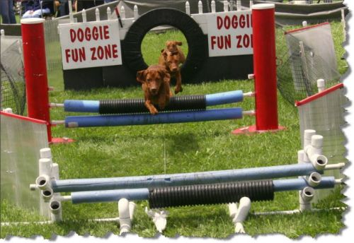 Dogs: Start practicing now for the obstacle course!