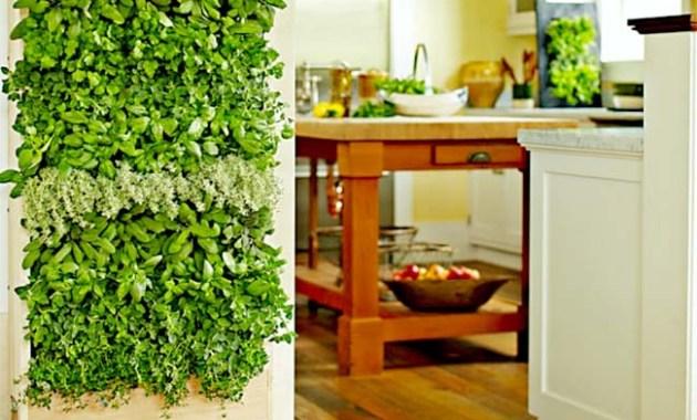 Vertical garden sederhana dalam rumah