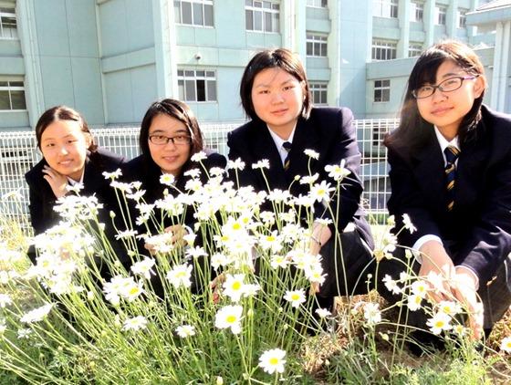 因島高校理科部と除虫菊