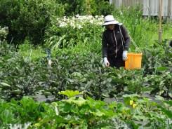 「であい農園」の無農薬野菜