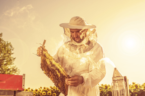 Les progrès de l'apiculture moderne