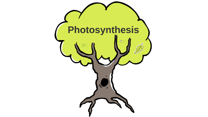 Photosynthesis For Kids By Liz Kelley