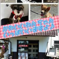 門川町のペットショップ DOG SHOP & SALON CREA  ブリーダー・ペット販売からカットまで♪ 延岡市~日向市周辺の方是非 見に来られて下さい♪