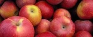apples closeup