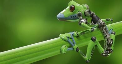 Los primeros robots vivos del mundo: Xenobots