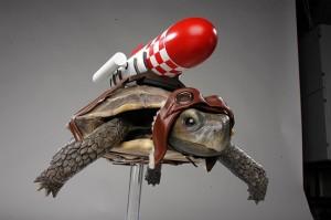 Rocket_Tortoise