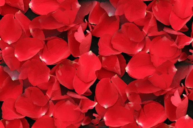 Image result for red rose petals