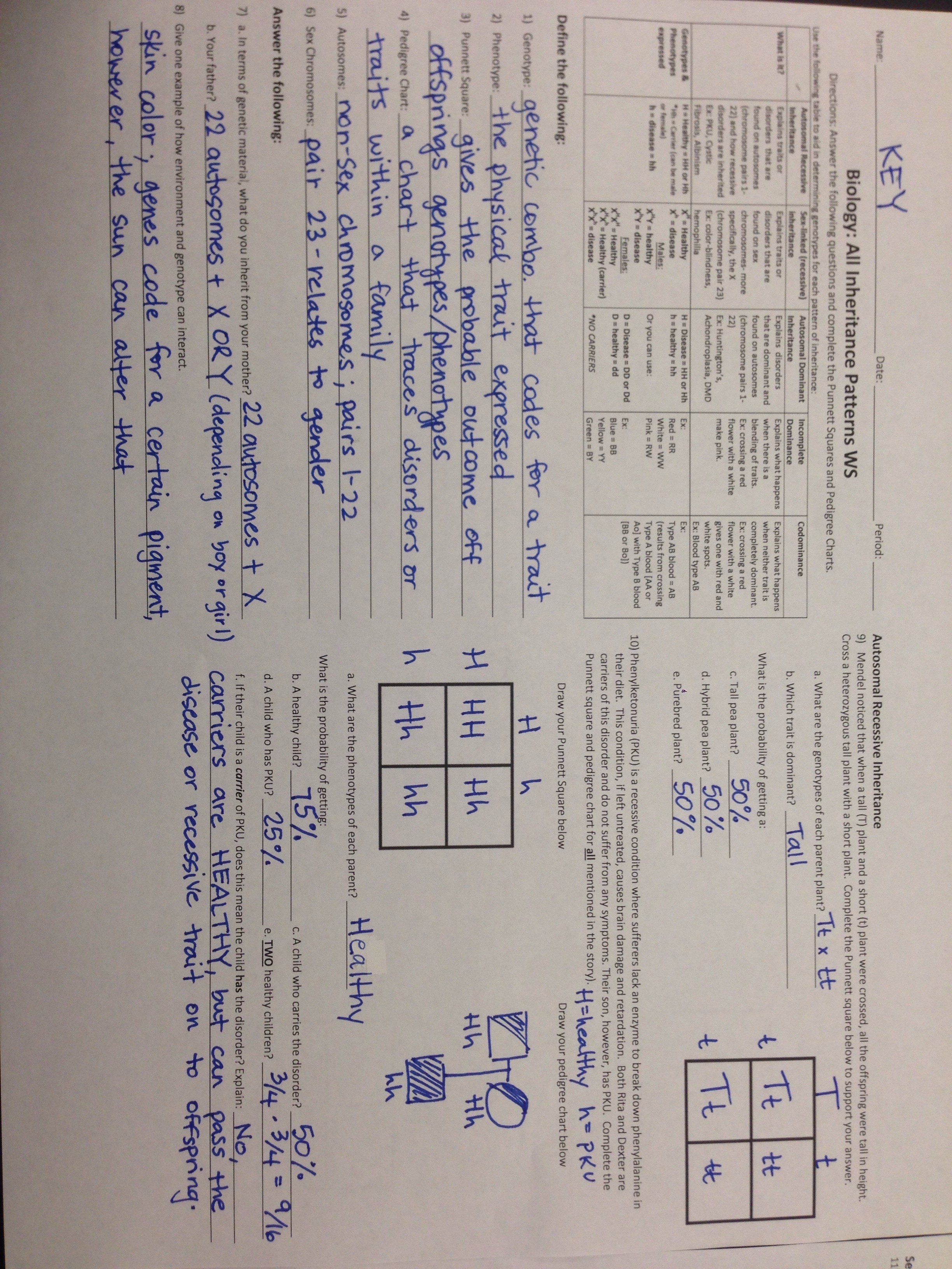 Pedigrees Worksheet Answers 9th Grade