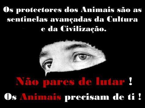 PROTECTORES.jpg