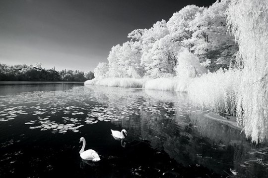Re  Infrared photography   what do you like about it   Open Talk     Another advantage of IR photography is removing unsightly water pollution