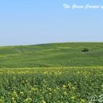 【チェコ・キヨフ】絶景!まるで緑の絨毯!モラヴィアの大草原の美しさは想像を超える!!|20.20