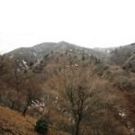 日本三百名山「大山」(梅ノ木尾根から南東尾根)